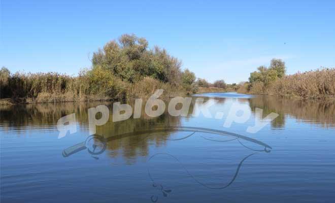 Красивая природа на реке
