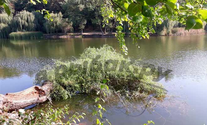 Место под поваленным деревом где может водится судак